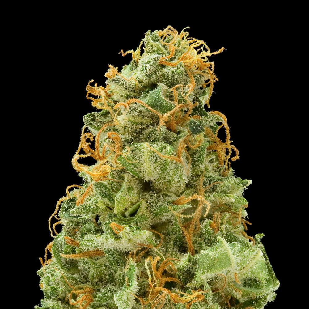 Shishkaberry Strawberry Fields Medical Marijuana Menu