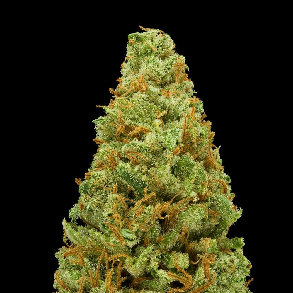 Amnesia Lemon Boulder Kind Care Medical Marijuana Menu