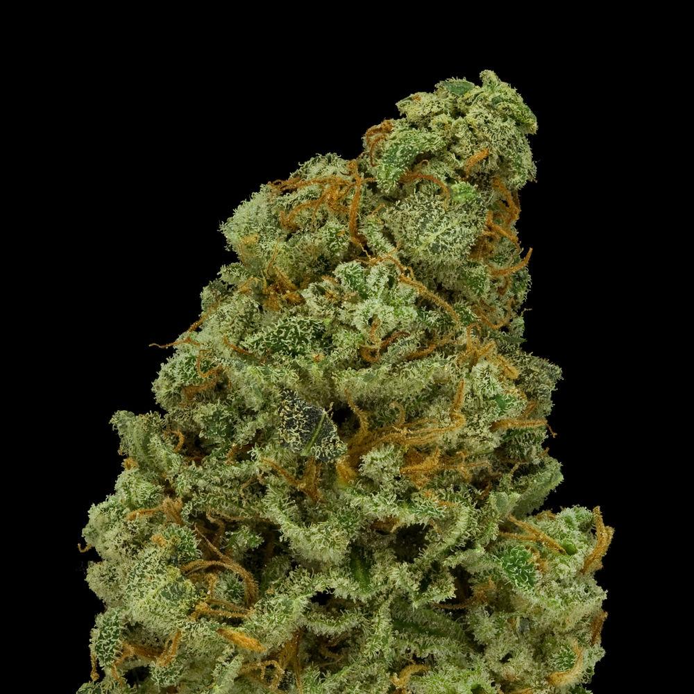 Colorado Kush: Medical Marijuana Menu