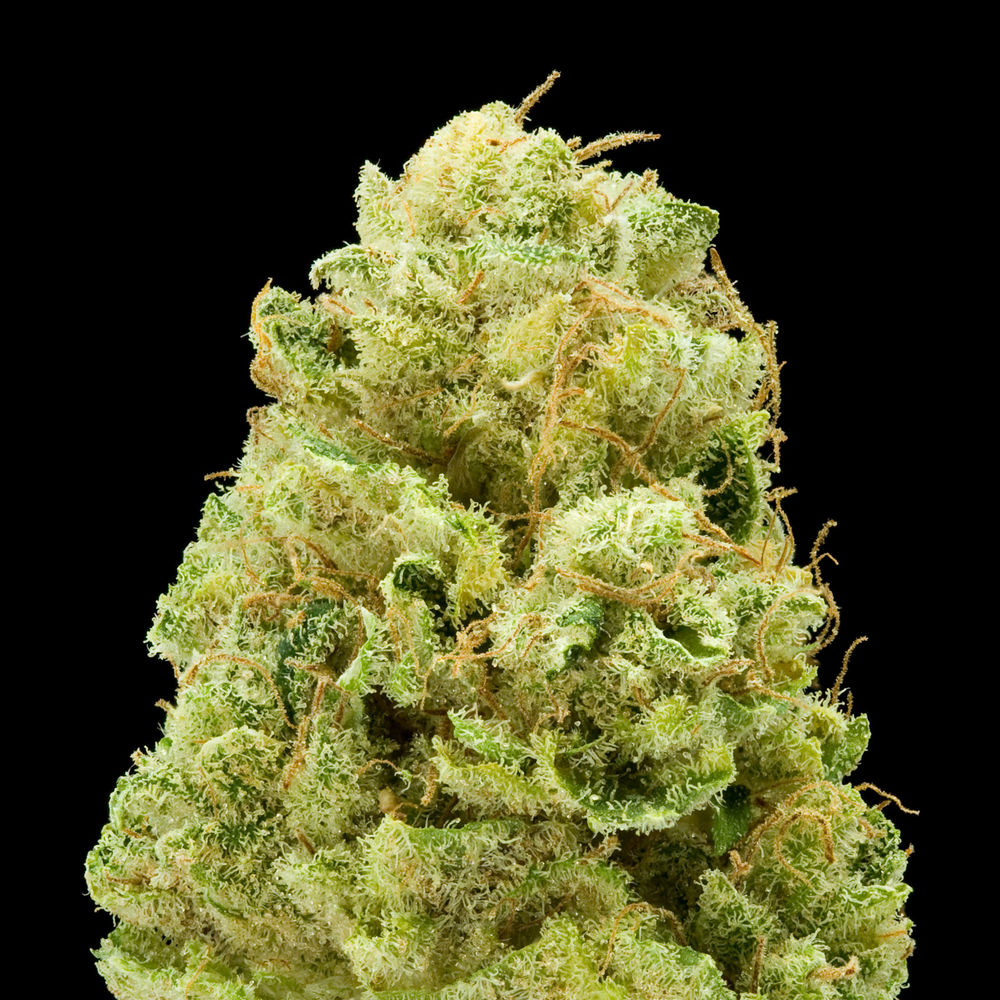 white widow weed marijuana - photo #16